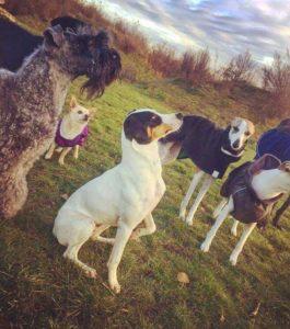 harmoni balans hundkurs socialisering hundhjälp