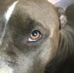 hundkurs hundträning hundpsykologi hundhjälp