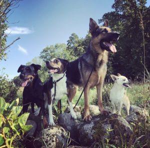 hundhjälp hundpsykologi hundträning hundkurs