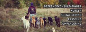 Konsultation socialisering hundträning kurser hundpsykologi malmö